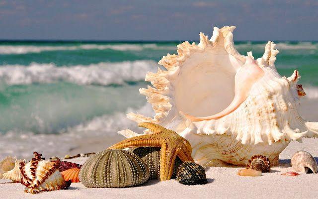 Zee en strand wallpaper met schelpen op het strand en zee op achtergrond