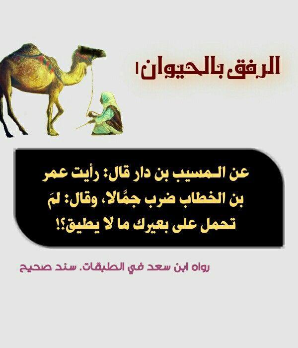 الرفق بالحيوان او الحيوانات أخلاق اسلامية مهجورة عند البعض Cute Animals Animals Movie Posters