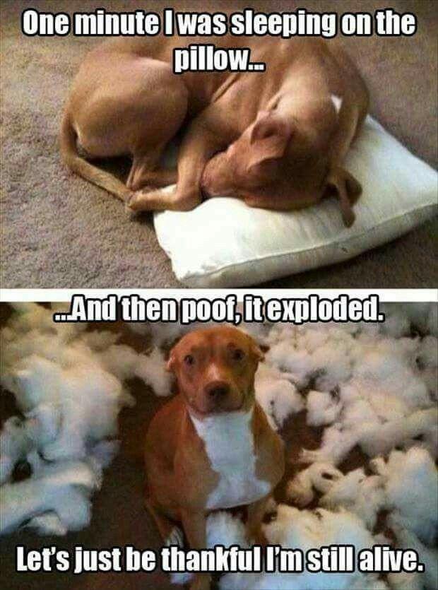 Not german shepherd but still dog humor
