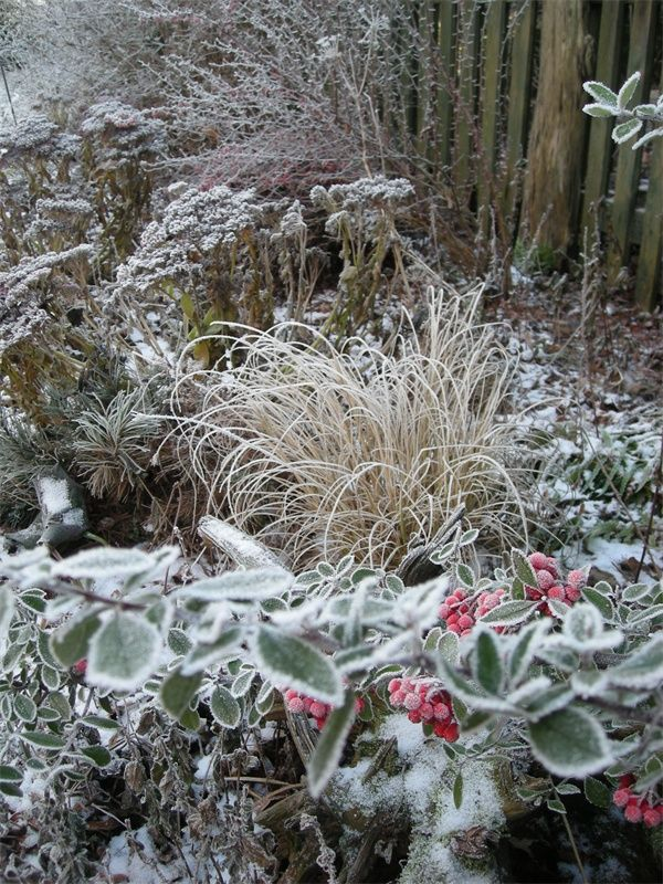 Winter Garden--so many textures and shapes here! Even subtle color!