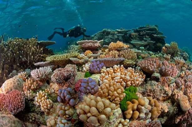 The Great Barrier Reef in Australia is the only living collective that can be seen from the Earth's orbit. It is composed of some 3,000 coral reefs and 600 islands that make up to at least 1,250 miles. Global warming is certainly threatening this marvel by causing coral bleaching that may mean functional extinction of this system by 2050.