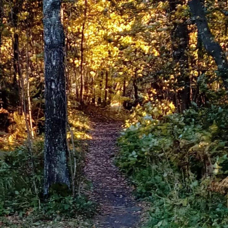 #autumn #helsinki #finland #forest
