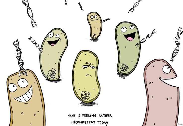 Transformación bacteriana: ¿Qué es una bacteria competente? #microMOOC :-)
