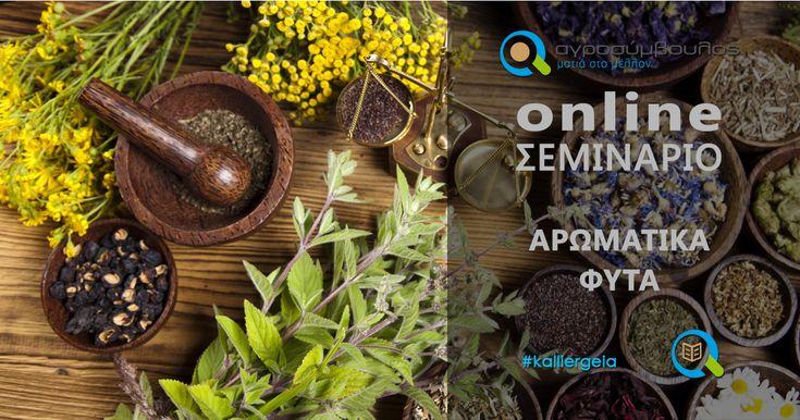 Σεμινάριο Αρωματικών – Φαρμακευτικών Φυτών   Webinar