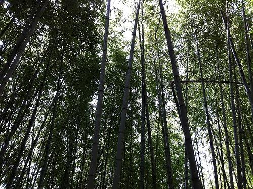 뚜벅이, 둘레길(덕산-위태)구간  http://itunes.apple.com/kr/app/ttubeog-i-geol-eoseo-galkka/id470117197?mt=8    하루종일 걷는다.   숲을 본다.  그리고 숲속에 삶에 찌든 피로감을 지우고 오다.     지리산 둘레길에서 만나는 이름모를 숲길들.. 굽이굽이 정말 좋다.