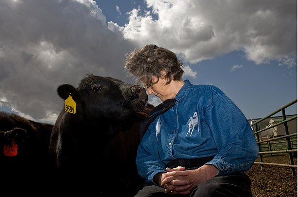 Temple grandin film essay