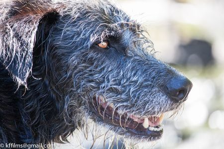 dog Photo by kevin fairbridge -- National Geographic Your Shot