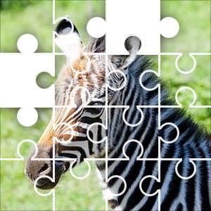 Young Zebra Jigsaw Puzzle, 6 Piece Classic. A young plains zebra in the Serengeti. When a foal is born the mother keeps