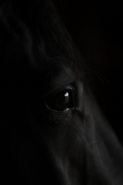 equineflo:   Low-Key Horse Eye By35tamme - Ella