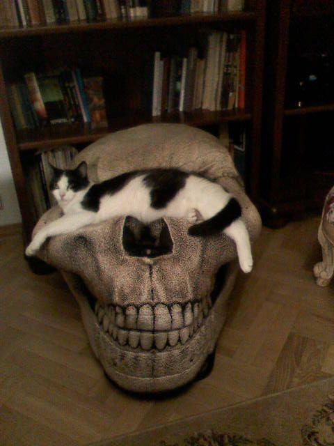 Myshkin on the skull chair