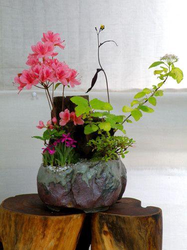 山野草展示会 2010年6/4~5 磐田天宏庭園にて l ミニ ガーデニング 花翠の 和風 盆栽の世界へようこそ