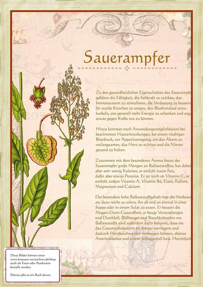 Sauerampfer http://www.kraeuter-verzeichnis.de/