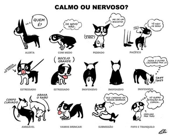 cachorro-calmo-ou-nervoso                                                                                                                                                                                 Mais