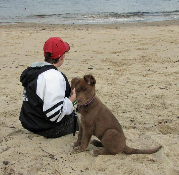 Think Tasmania is looking for suggestions regarding Pet Friendly Accommodation in Tassie.