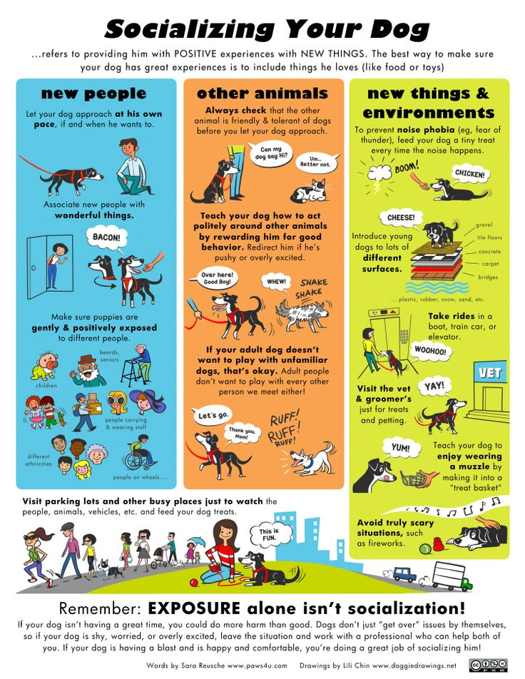 SocializingYourDog17x22:  one of the MAJOR components to a 'well balanced' dog...check it out!