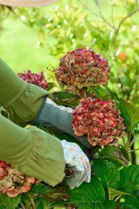 Les 25 meilleures id es de la cat gorie arbre de p ques sur pinterest d corations de p ques - Faut il couper les fleurs fanees des hortensias ...