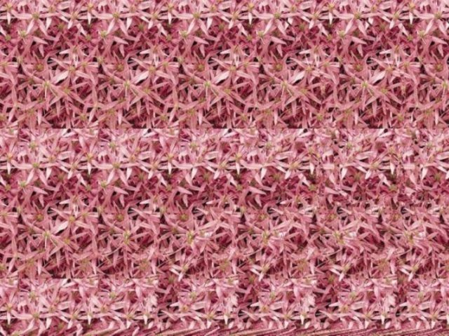 Stereograms are 3D images hidden within another picture. In order to view the 3D images, simply stare at the picture until the image starts to take shape.