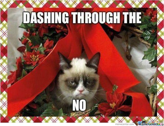 233 best grumpy cat images on Pinterest | Grumpy kitty, Grumpy cat ...