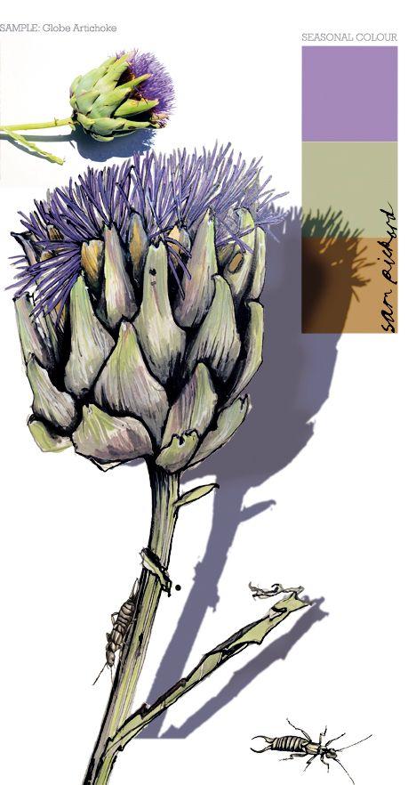 Planet Sam: Colour from the season - Wild Artichoke Thistle purple Sam Pickard