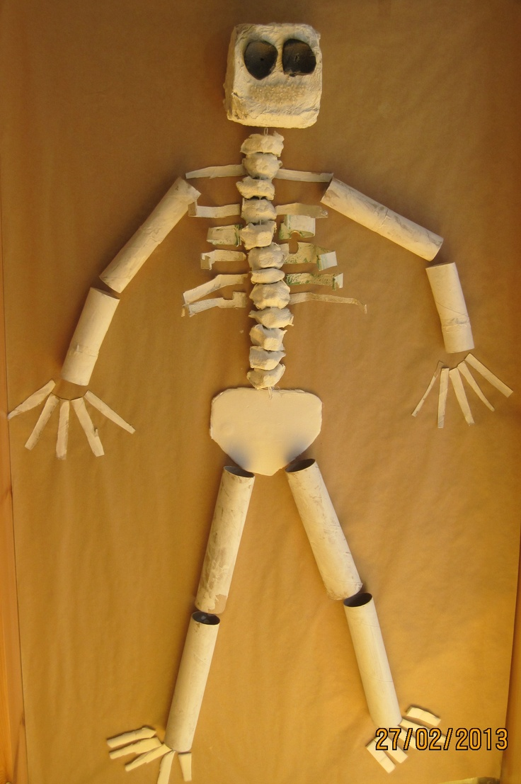 Ee D Bb F D Cfb A B E Skeletal System Preschool Learning on 4 By 5 Size Skeleton Diagrams