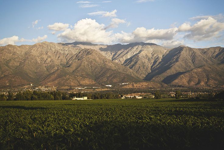 The Andes over Cousiño Macul vineyard.