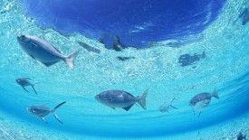 Under The Sea Wallpaper Border