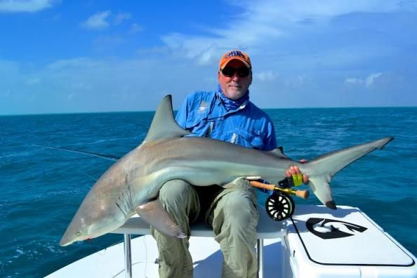 Possible world record shark caught on a fly rod! Instead of weighing in the massive shark, Michael Roth, does something shocking and respectable! Read the article to find out.