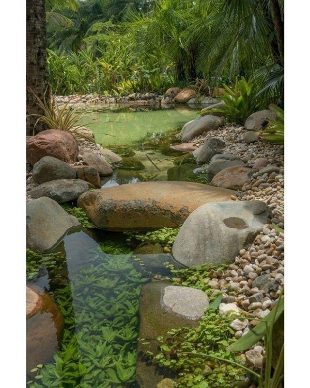 #olhomágicocj #pessutopaisagismo Criei esta piscina natural com rochas da região, sem agredir ou extrair elementos naturais. Plantas aquáticas foram utilizadas com a finalidade de ajudar na filtragem, mas seu efeito estético arremata a beleza do conjunto. @pessutopaisagismo #paisagismo #greeninspiration #verde #landscape #jardim