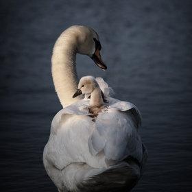 moms: Baby, Wildlife Photograhi