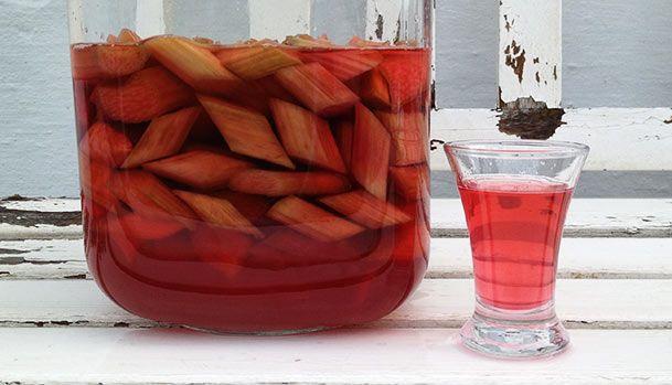 Hjemmelavet rabarbersnaps - Opskrift på snaps lavet af vodka og rabarber - Smager af sol og sommer, også til vinter. Brug til drinks eller til desserter.