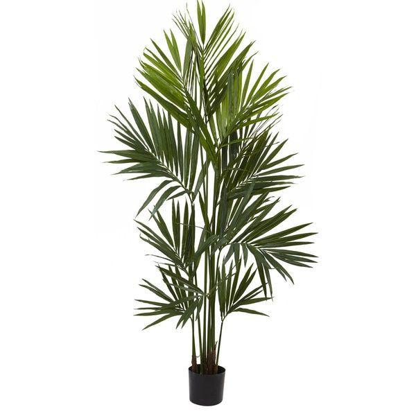 17 best ideas about kentia palm on pinterest