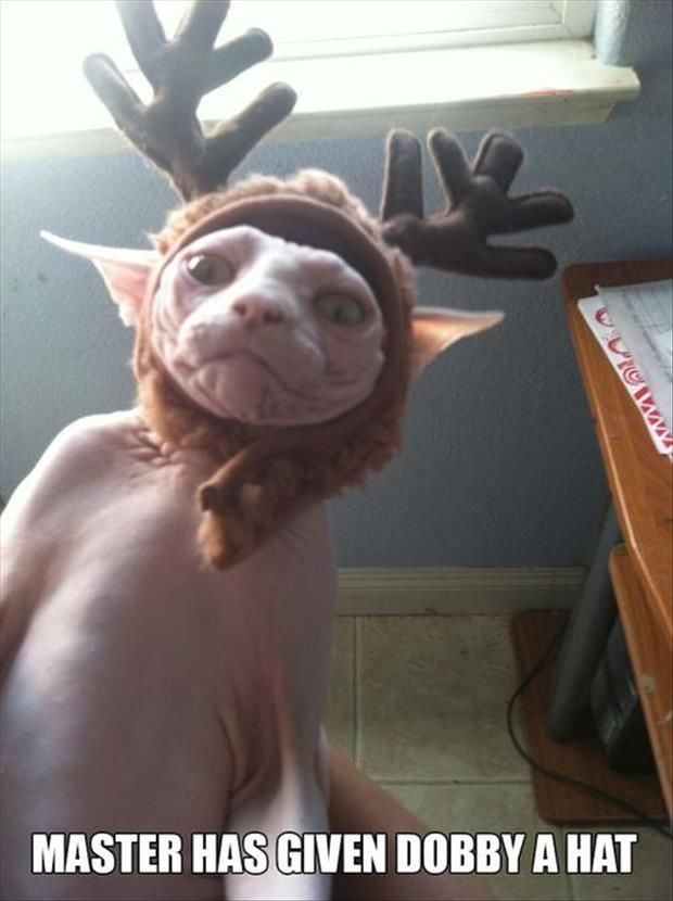 """Humour Harry Potter : """"Maitre a donné à Dobby un vêtement."""""""