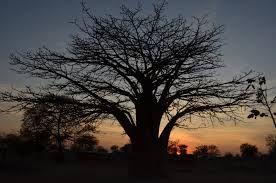 「タンザニア 夕暮れ」の画像検索結果