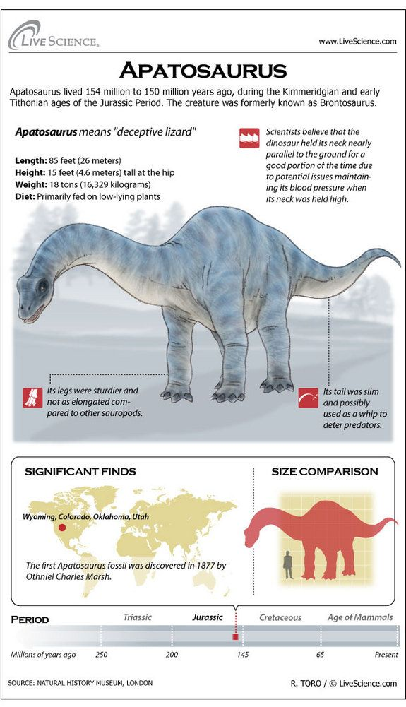 Infographic: Dinosaur profile of the plant-eating dinosaur Apatosaurus.