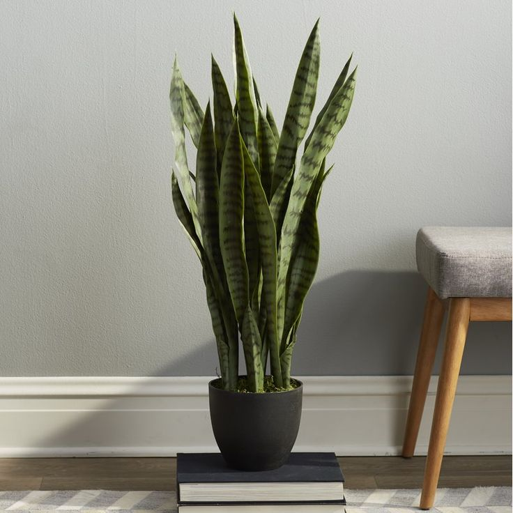 Bring a natural touch to your foyer or home office with this faux sanseviera plant, showcasing lush greenery nestled in a black planter.