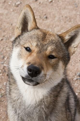 Shikoku Ken- I love that expression!
