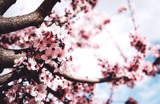 Spring - EYE INTERIOR DESIGN