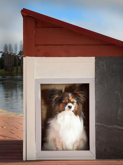 Phoebe framed by contemporary styled RitzPetz dog house