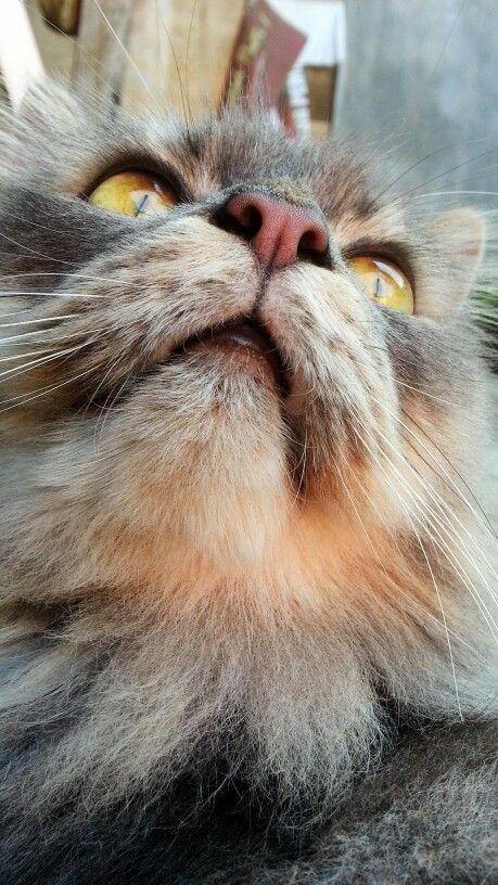 Benji #cat #pet