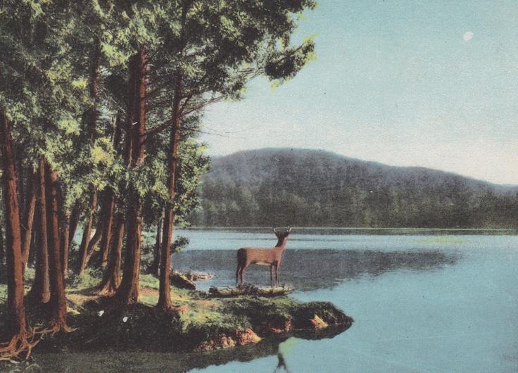 ADIRONDACK MOUNTAINS, New York, DEER, Lake, Vintage