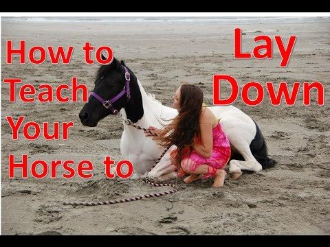 how to teach a horse to lay down on cue