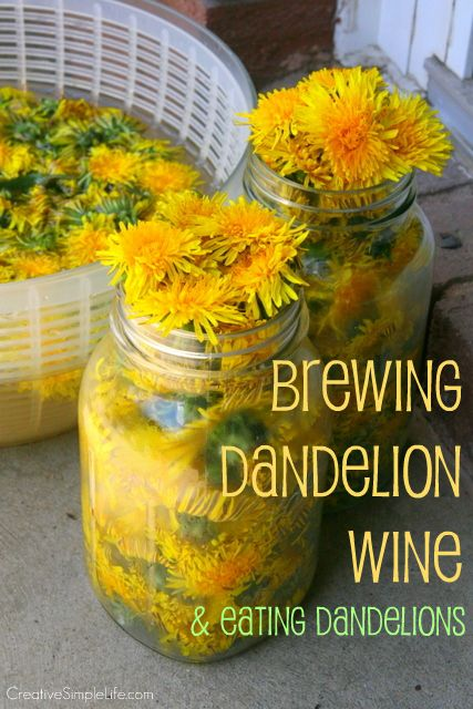 Brewing Dandelion Wine & Eating Dandelions - CreativeSimpleLife.com