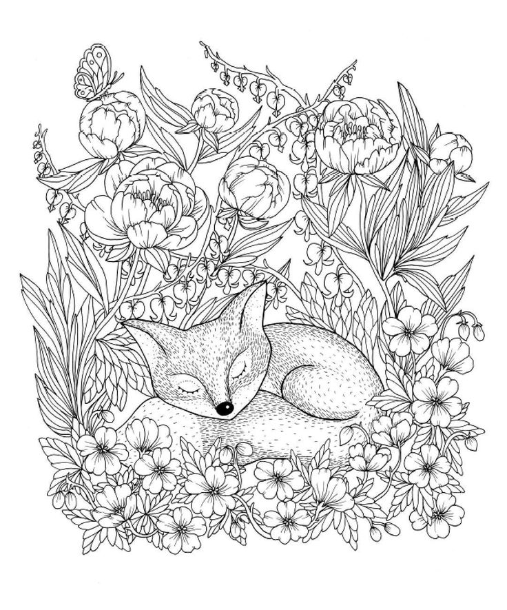 809 Best Animal Coloring Pages For Adults Images On
