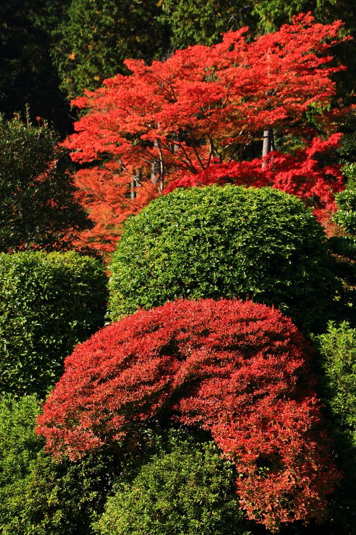 赤く彩られた京都の紅葉の隠れた名所の三室戸寺