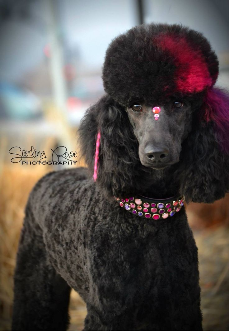 -repinned- More beautiful creative dog grooming