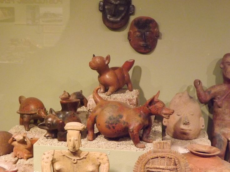 Hairless dogs used for food aztec see book page185 for Anthropology of food and cuisine