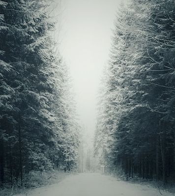 Snowy forest road in Värmland, Sweden. Available as poster at printler.com, the marketplace for photo art. Photographer Anna Ekman.