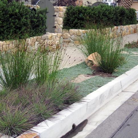 Great groundcovers & grasses make this sidewalk strip low-water & beautiful.
