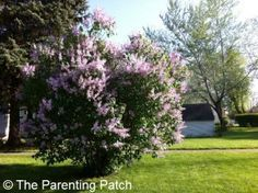 Tips for Cutting Back Overgrown Bushes and Shrubs. http://parentingpatch.com/tips-for-cutting-back-overgrown-bushes-and-shrubs/