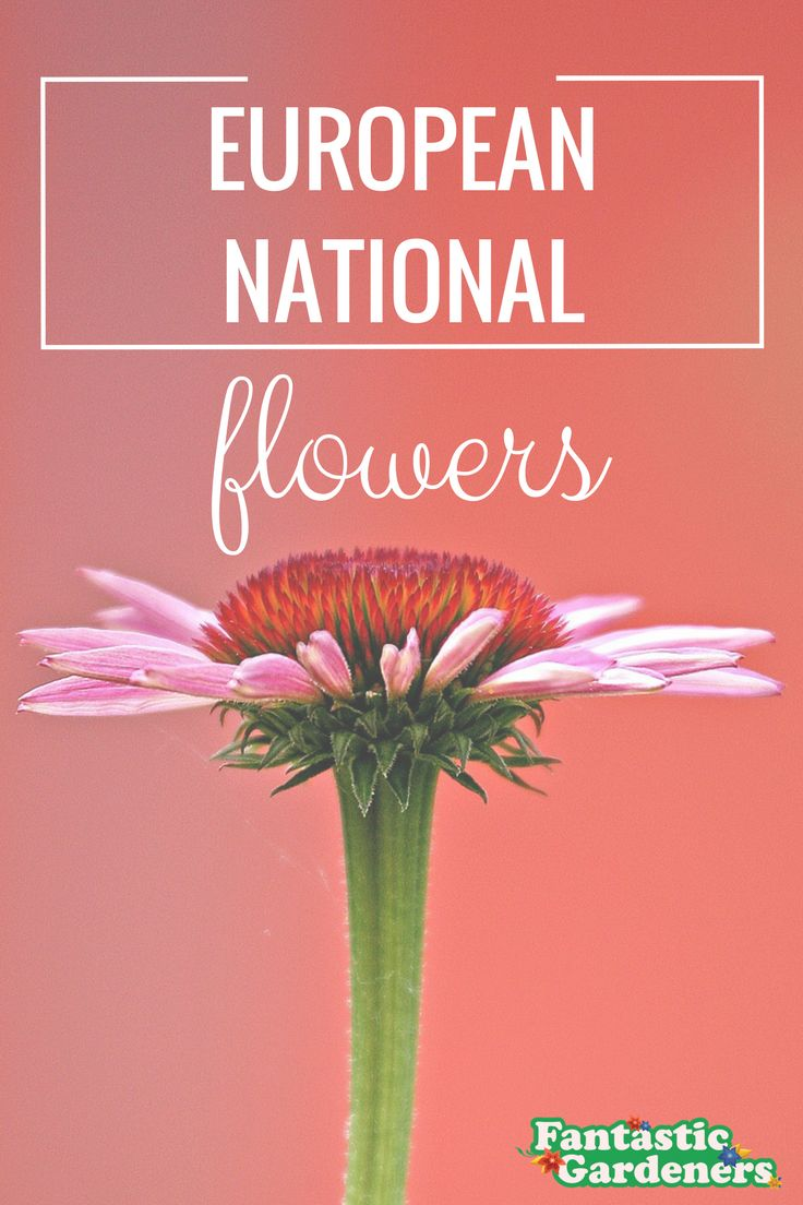 Check out what are the national flowers of European countries :) https://blog.fantasticgardeners.co.uk/europe-national-flowers/?smm=5